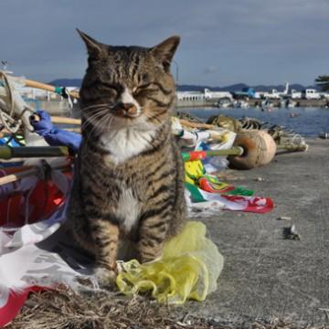 キジトラ白猫海の猫画像