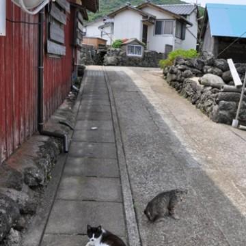 ハチワレ猫キジトラ猫屋外の猫画像