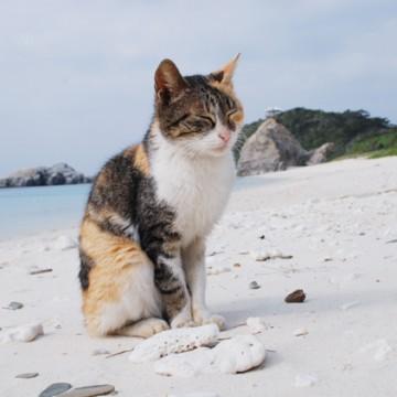 三毛猫砂浜の猫画像