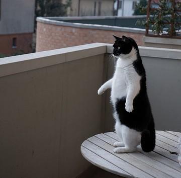 黒白猫ベランダの猫画像