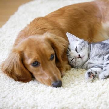 サバトラ猫子猫犬の猫画像