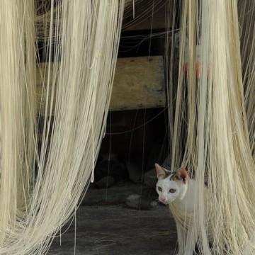 とび三毛猫屋外の猫画像