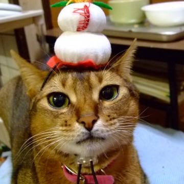 キジトラ猫正月の猫画像