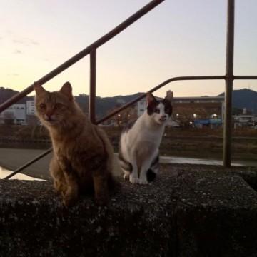 茶トラ猫とび三毛猫屋外の猫画像