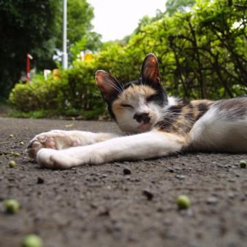 三毛猫屋外の猫画像