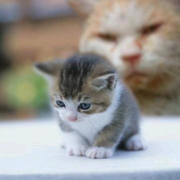キジトラ白猫茶トラ猫屋内の猫画像