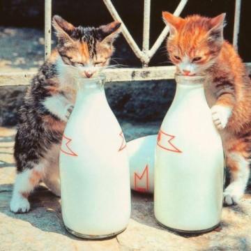 三毛猫茶トラ白猫子猫瓶の猫画像