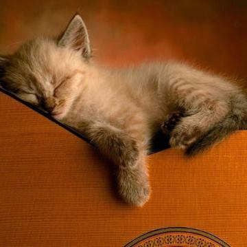 灰猫子猫ギターの猫画像