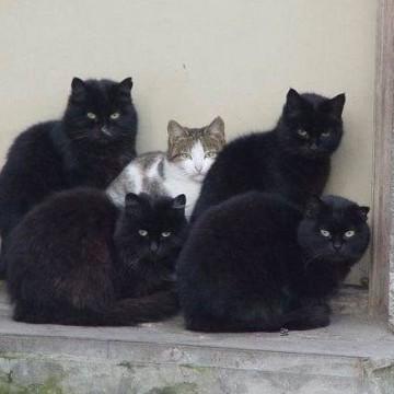 黒猫キジトラ白猫屋外の猫画像