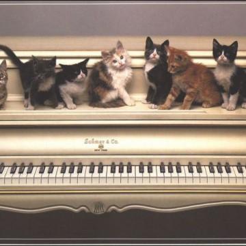 キジトラ猫ハチワレ猫キジトラ白猫茶トラ猫灰猫子猫ピアノの猫画像