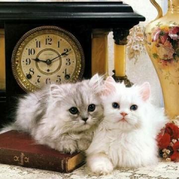 サバトラ猫白猫時計の猫画像