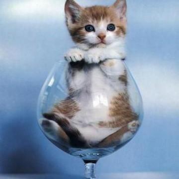 キジトラ白猫子猫グラスの猫画像