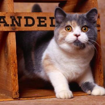 三毛猫木箱の猫画像