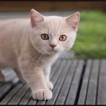 茶トラ白猫子猫屋外の猫画像