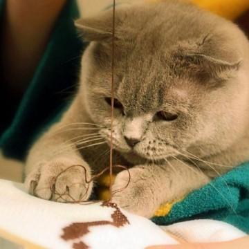 灰猫子猫糸の猫画像