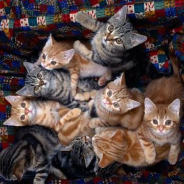 茶トラ猫キジトラ猫子猫の猫画像