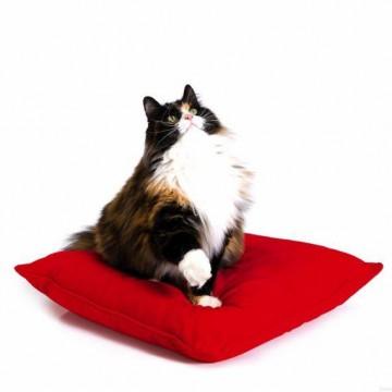 キジトラ白猫デブ座布団の猫画像