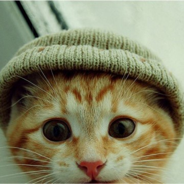 茶トラ猫子猫帽子の猫画像