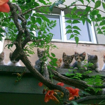 茶トラ猫ハチワレ猫キジトラ猫茶トラ白猫子猫屋外の猫画像