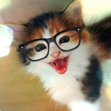 三毛猫子猫メガネの猫画像