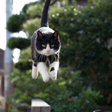 ハチワレ猫ジャンプの猫画像