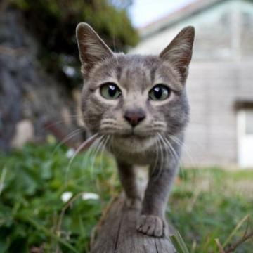 灰猫屋外の猫画像