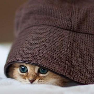 キジトラ猫子猫帽子の猫画像