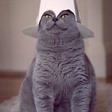 灰猫被り物の猫画像