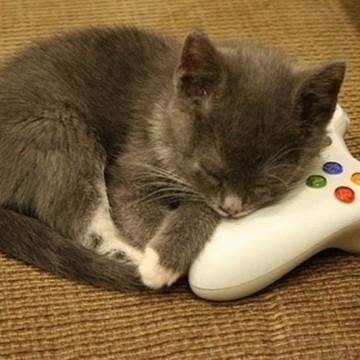 灰猫子猫コントローラーの猫画像