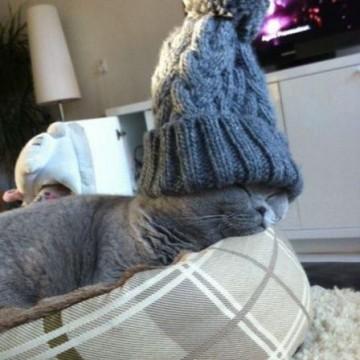 灰猫子猫昼寝帽子の猫画像