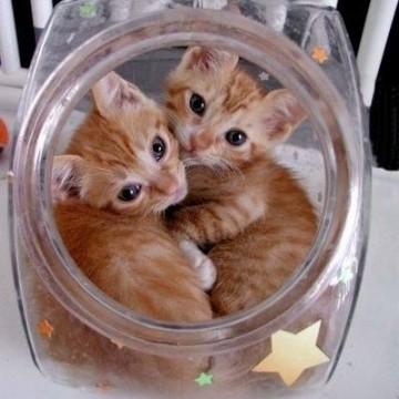 茶トラ猫子猫瓶の猫画像