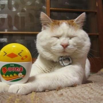 茶トラ白猫のりたまの猫画像