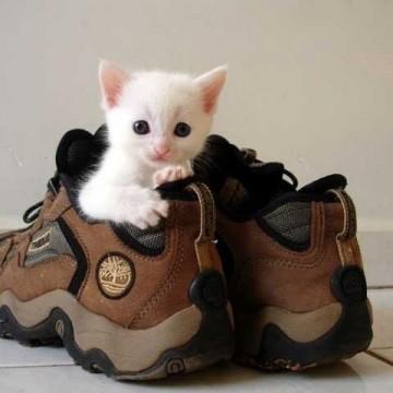 白猫子猫靴の猫画像