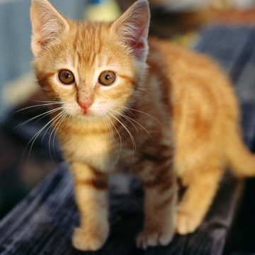 茶トラ猫子猫屋外の猫画像