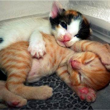 茶トラ猫三毛猫子猫の猫画像
