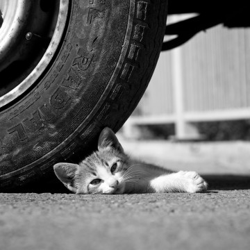 キジトラ猫子猫タイヤの猫画像