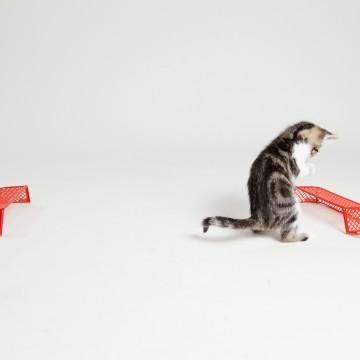 キジトラ白猫子猫サッカーの猫画像