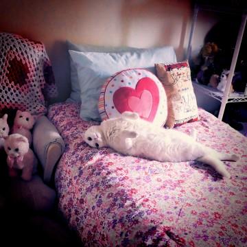 白猫ベッドの猫画像