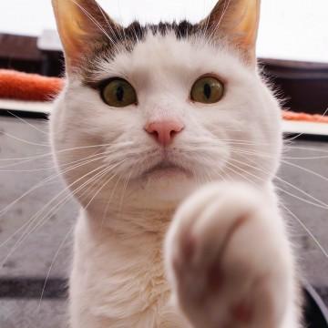 とび三毛猫屋内の猫画像