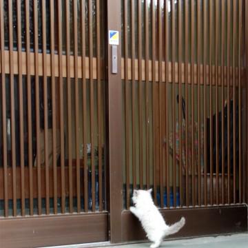 白猫子猫玄関の猫画像