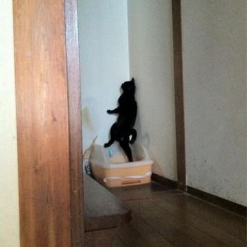 黒猫トイレの猫画像