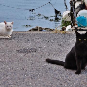 黒猫白猫海の猫画像