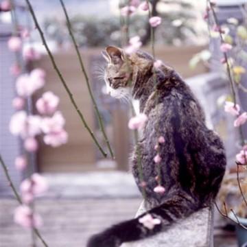 キジトラ白猫屋外の猫画像