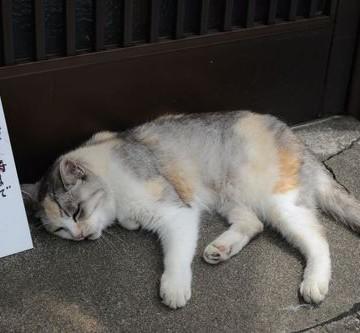 三毛猫休暇屋外の猫画像