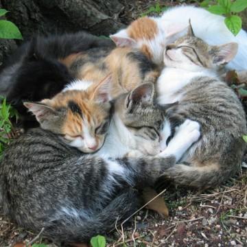 三毛猫サバトラ白猫黒猫茶トラ白猫子猫昼寝屋外の猫画像