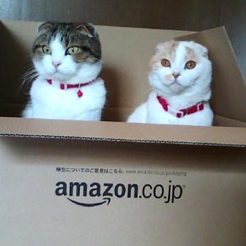 キジトラ白猫茶トラ白猫ダンボールの猫画像