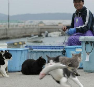 ハチワレ猫黒猫灰猫魚の猫画像