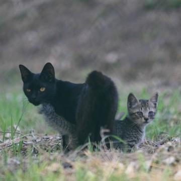 黒猫キジトラ猫子猫屋外の猫画像