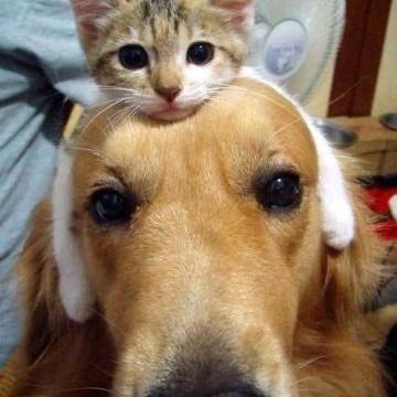 キジトラ白猫子猫犬の猫画像