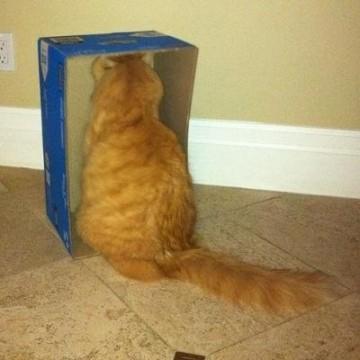 茶トラ猫箱の猫画像